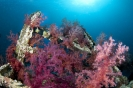 soft coral_2