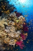 soft coral_4