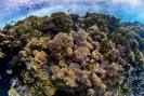 stony coral_10