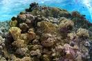 stony coral_2