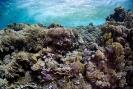 stony coral_3