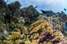 stony coral_5