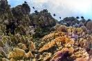 stony coral_6