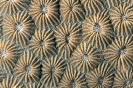 Stony Corals_21