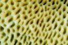 Stony Corals_40