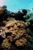 Stony Corals_46