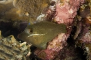 Triggerfishes & Filefishes