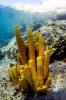 sponges_1