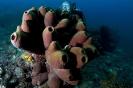 Sponges_23