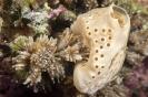 sponges_2