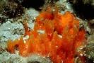 Sponges_7