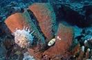 Sponges_8