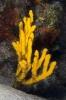 Sponges_9