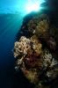 Underwater Scenes_10
