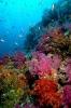 Underwater Scenes_15
