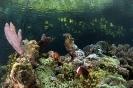 Underwater Scenes