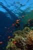 Underwater Scenes_24