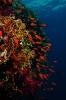 Underwater Scenes_25