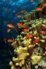 Underwater Scenes_27