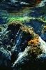 Underwater Scenes_30