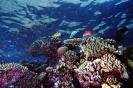 Underwater Scenes_32