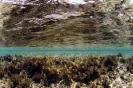Underwater Scenes_36