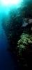 Underwater Scenes_3