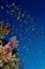 Underwater Scenes_41