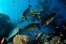 Underwater Scenes_46
