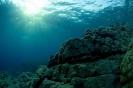 Underwater Scenes_60