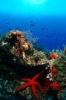 Underwater Scenes_64
