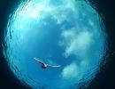 Underwater Scenes_75