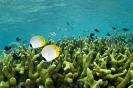 Underwater Scenes_81