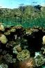 Underwater Scenes_9